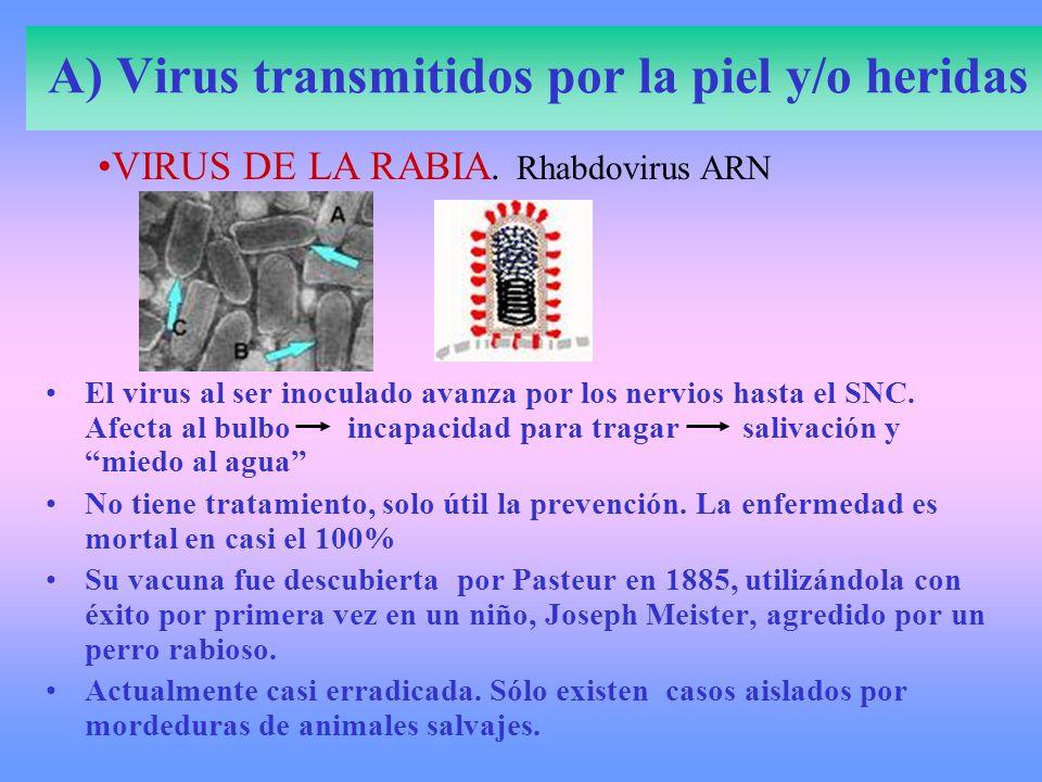 B) Virus transmitidos por el aire VIRUS DE LA GRIPE.