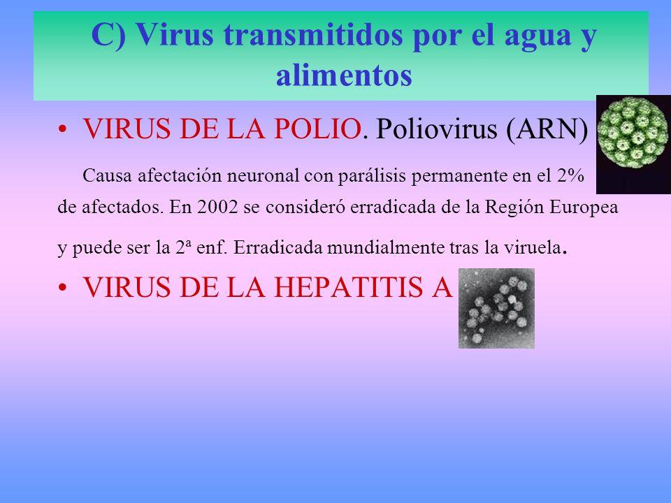 D) Virus transmitidos por vía sexual SIDA. VIH. África. VIRUS HERPES 2. Herpes virus (ADN)