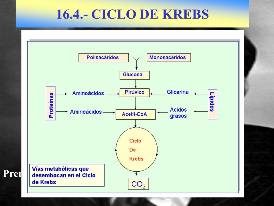 16.4.- CICLO DE KREBS Premio Nobel en 1953