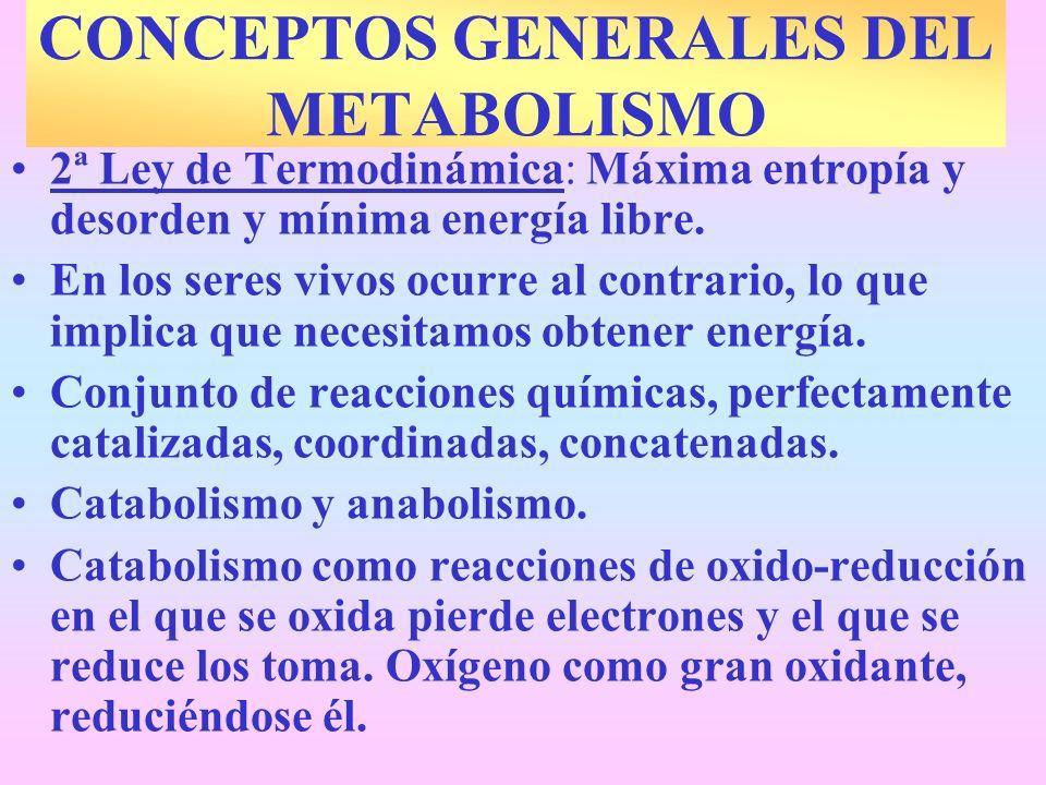 2ª Ley de Termodinámica: Máxima entropía y desorden y mínima energía libre. En los seres vivos ocurre al contrario, lo que implica que necesitamos obt