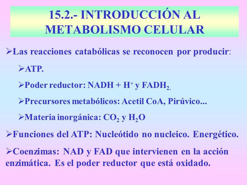 15.2.- INTRODUCCIÓN AL METABOLISMO CELULAR Las reacciones catabólicas se reconocen por producir: ATP. Poder reductor: NADH + H + y FADH 2. Precursores
