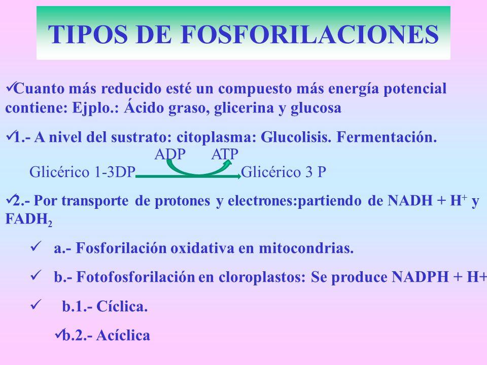 Cuanto más reducido esté un compuesto más energía potencial contiene: Ejplo.: Ácido graso, glicerina y glucosa 1.- A nivel del sustrato: citoplasma: G