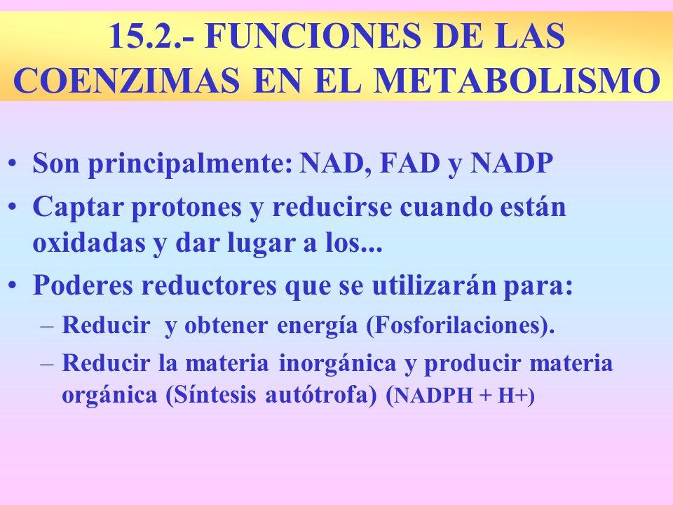 15.2.- FUNCIONES DE LAS COENZIMAS EN EL METABOLISMO Son principalmente: NAD, FAD y NADP Captar protones y reducirse cuando están oxidadas y dar lugar