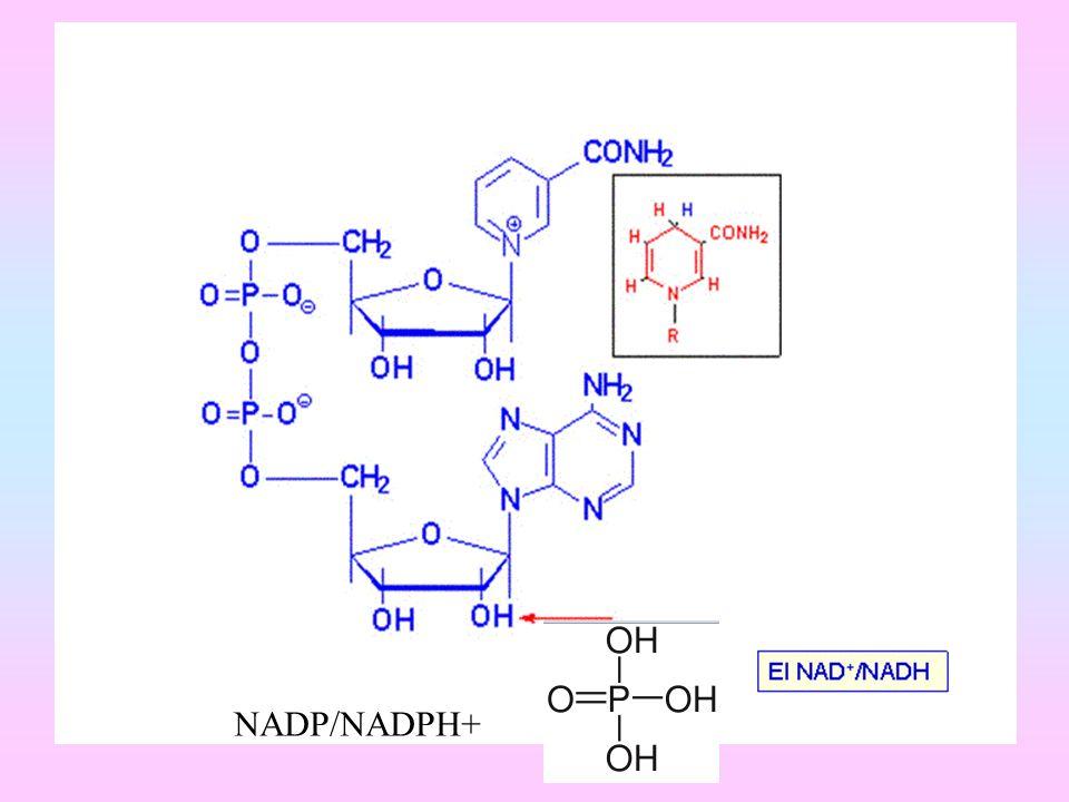 NADP/NADPH+