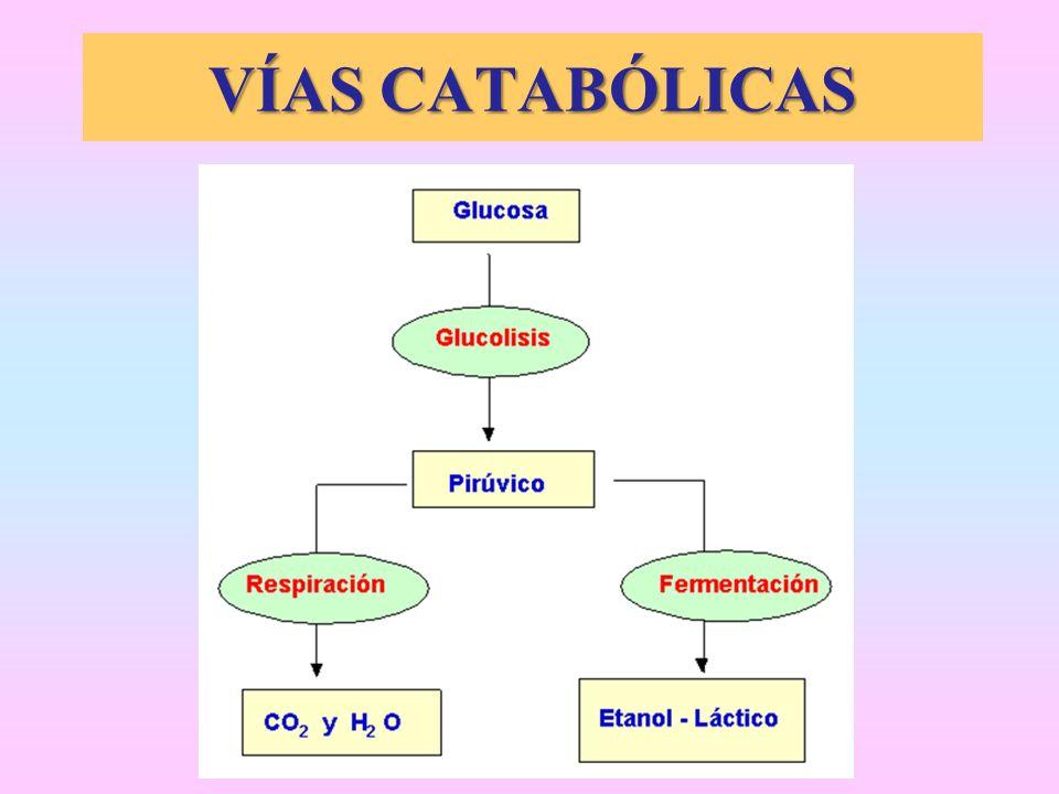 VÍAS CATABÓLICAS