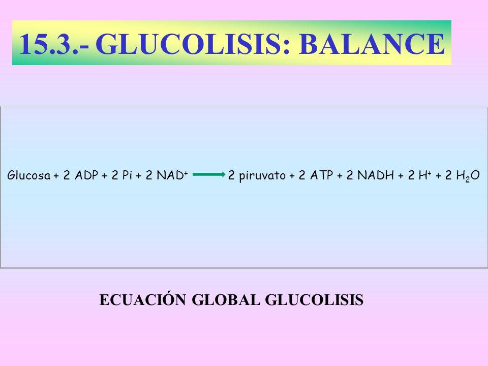 15.3.- GLUCOLISIS: BALANCE Glucosa + 2 ADP + 2 Pi + 2 NAD + 2 piruvato + 2 ATP + 2 NADH + 2 H + + 2 H 2 O ECUACIÓN GLOBAL GLUCOLISIS