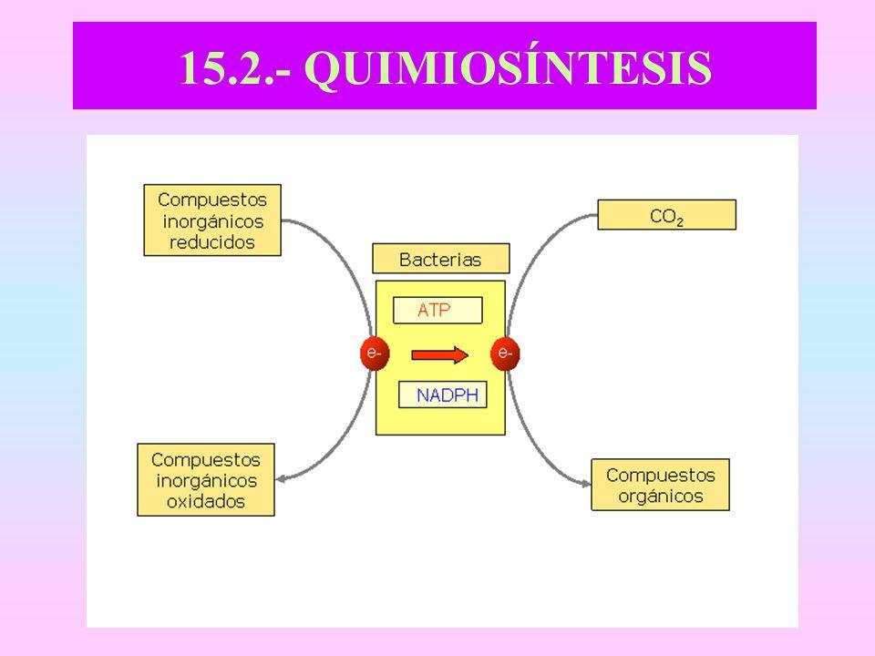 15.2.- QUIMIOSÍNTESIS