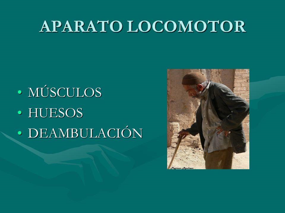 B. SISTEMAS DE MOVILIZACIÓN /INMOVILIZACIÓN AYUDAS DEAMBULACIÓN BASTONES ANDADORES