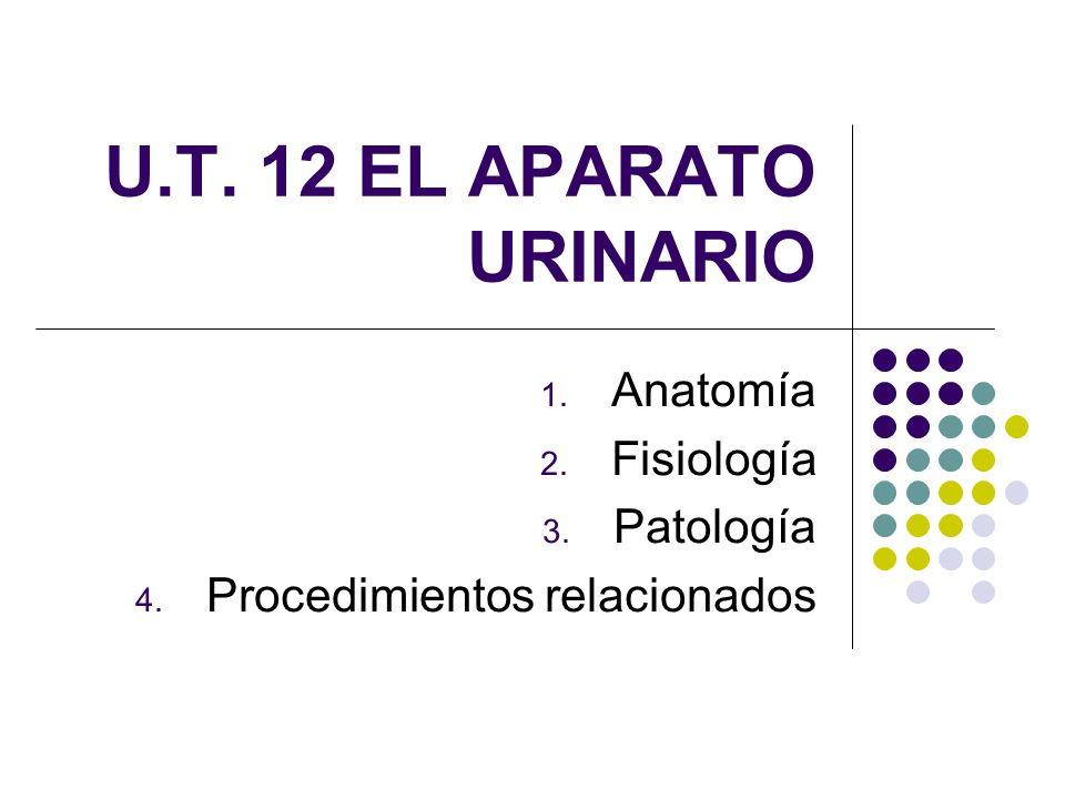 U.T. 12 EL APARATO URINARIO 1. Anatomía 2. Fisiología 3. Patología 4. Procedimientos relacionados