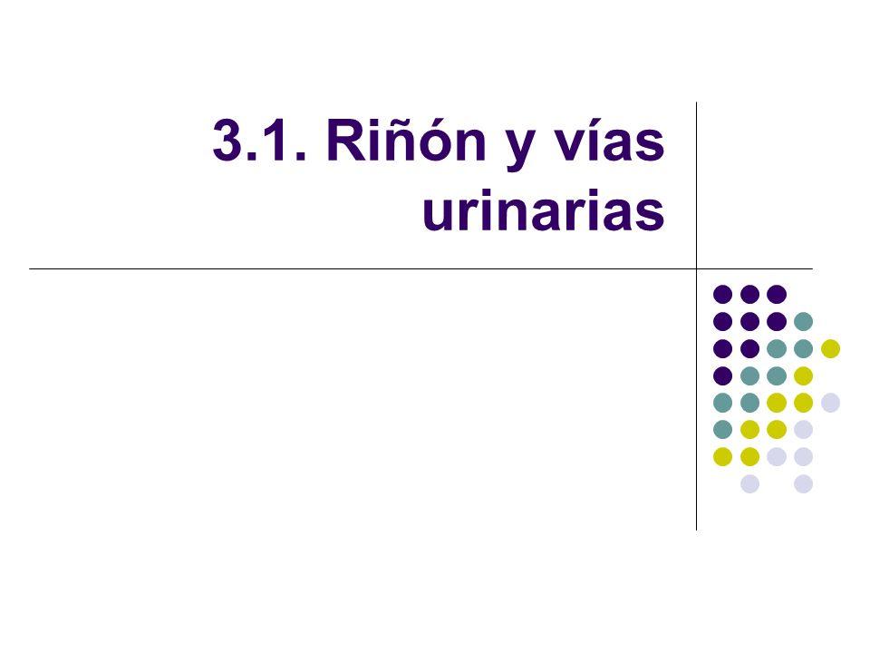 3.1. Riñón y vías urinarias