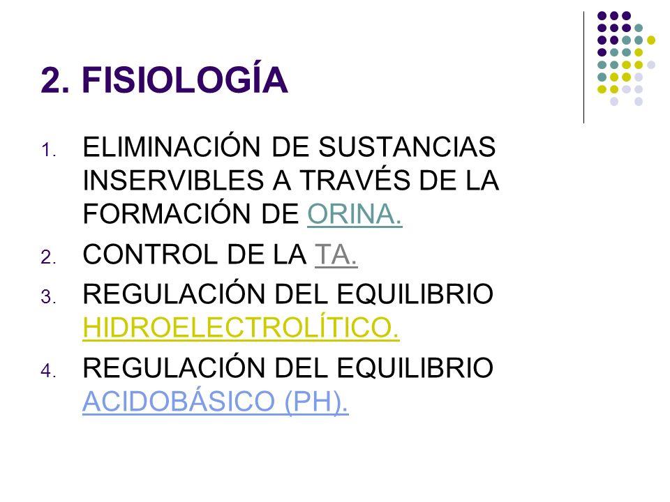 2.FISIOLOGÍA 1. ELIMINACIÓN DE SUSTANCIAS INSERVIBLES A TRAVÉS DE LA FORMACIÓN DE ORINA.