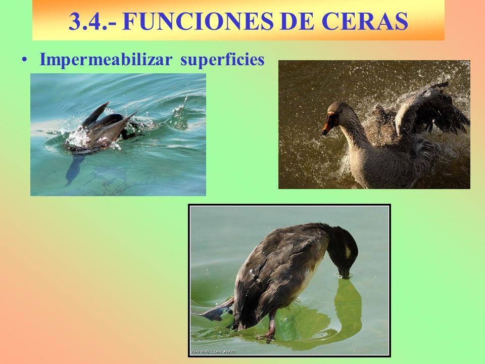 Impermeabilizar superficies 3.4.- FUNCIONES DE CERAS