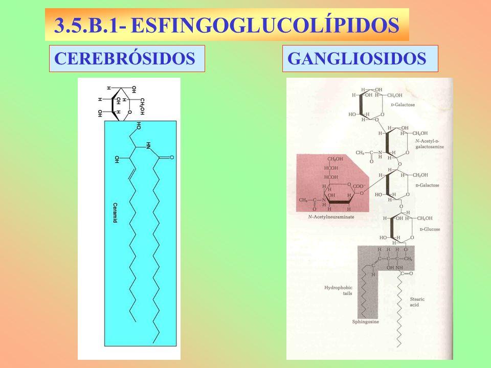 3.5.B.1- ESFINGOGLUCOLÍPIDOS CEREBRÓSIDOSGANGLIOSIDOS