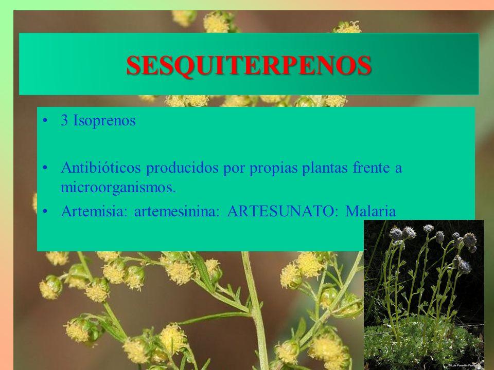 SESQUITERPENOS 3 Isoprenos Antibióticos producidos por propias plantas frente a microorganismos. Artemisia: artemesinina: ARTESUNATO: Malaria