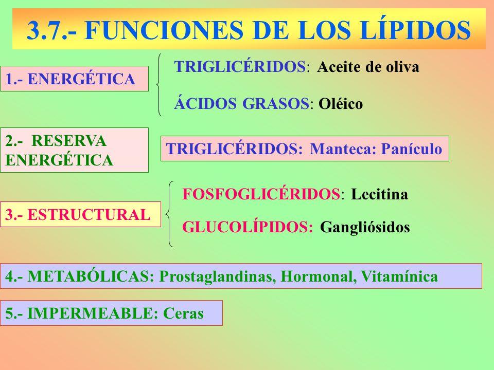 3.7.- FUNCIONES DE LOS LÍPIDOS 1.- ENERGÉTICA ÁCIDOS GRASOS: Oléico TRIGLICÉRIDOS: Aceite de oliva GLUCOLÍPIDOS: Gangliósidos 3.- ESTRUCTURAL FOSFOGLI