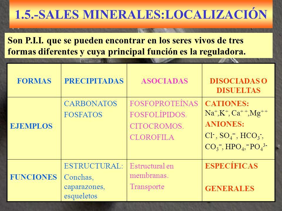 1.5.-SALES MINERALES:LOCALIZACIÓN FORMASPRECIPITADASASOCIADASDISOCIADAS O DISUELTAS EJEMPLOS CARBONATOS FOSFATOS FOSFOPROTEÍNAS FOSFOLÍPIDOS. CITOCROM