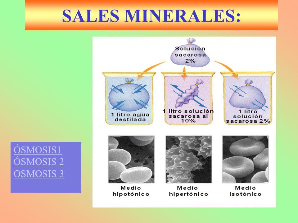 SALES MINERALES: ÓSMOSIS1 ÓSMOSIS 2 OSMOSIS 3