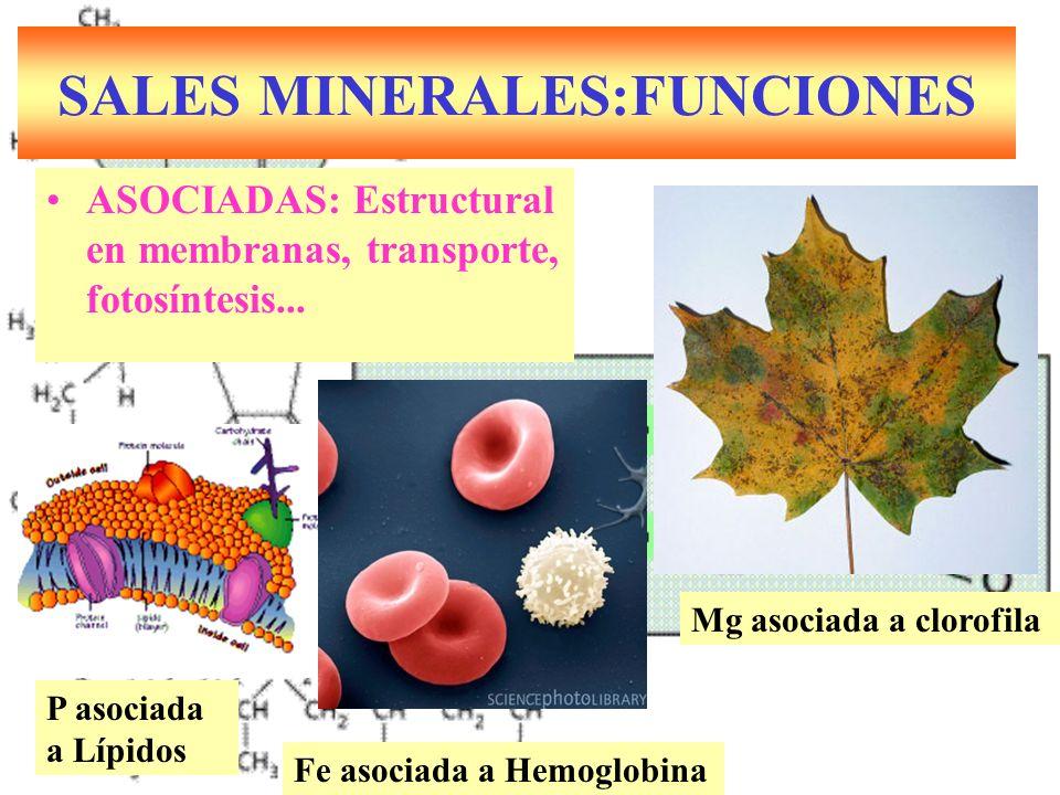 SALES MINERALES:FUNCIONES ASOCIADAS: Estructural en membranas, transporte, fotosíntesis...