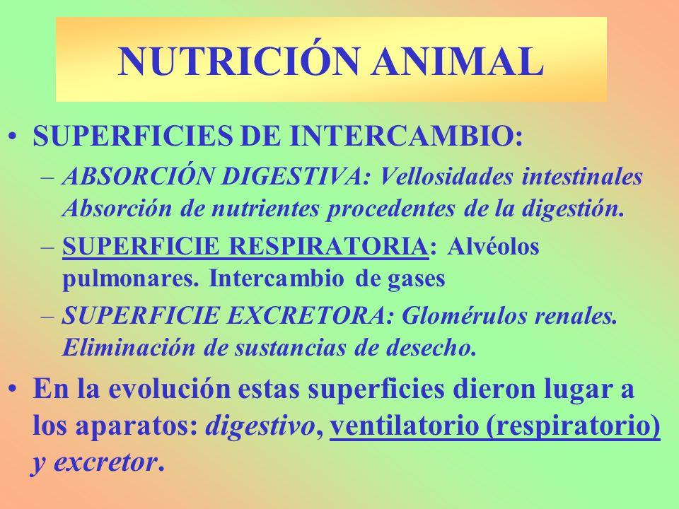 Nutrición heterótrofa: Materia y energía Procesos: – INGESTIÓN: Captación de alimentos.