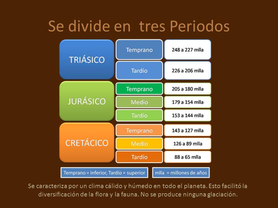 Se divide en tres Periodos Se caracteriza por un clima cálido y húmedo en todo el planeta. Esto facilitó la diversificación de la flora y la fauna. No