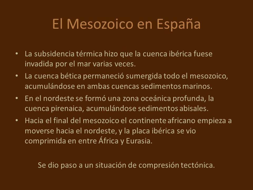 El Mesozoico en España La subsidencia térmica hizo que la cuenca ibérica fuese invadida por el mar varias veces. La cuenca bética permaneció sumergida