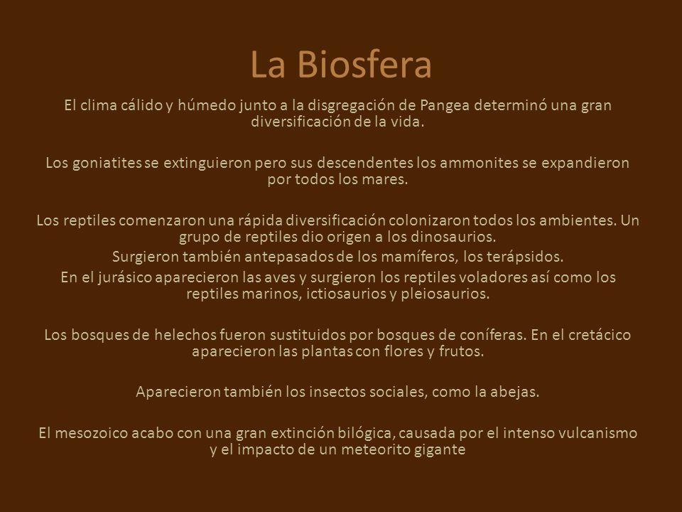 La Biosfera El clima cálido y húmedo junto a la disgregación de Pangea determinó una gran diversificación de la vida. Los goniatites se extinguieron p