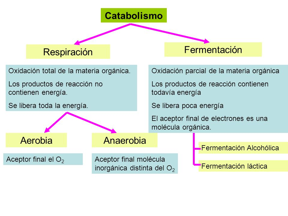 Catabolismo Respiración Fermentación AerobiaAnaerobia Oxidación total de la materia orgánica. Los productos de reacción no contienen energía. Se liber