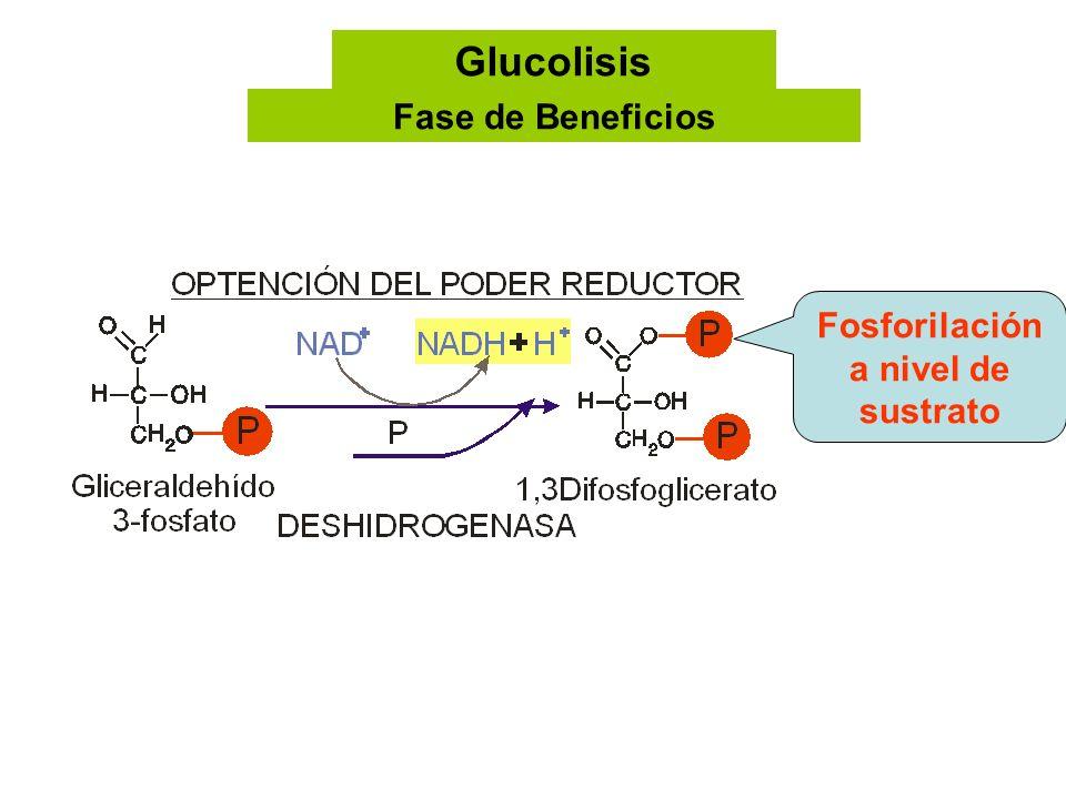 Fosforilación a nivel de sustrato Glucolisis Fase de Beneficios