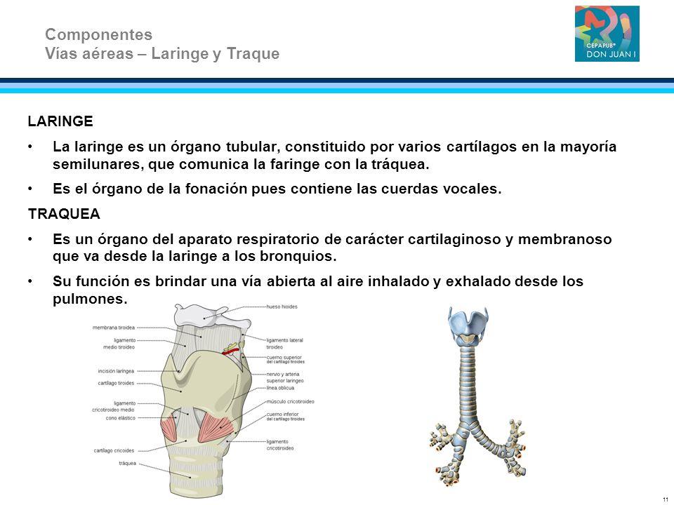LARINGE La laringe es un órgano tubular, constituido por varios cartílagos en la mayoría semilunares, que comunica la faringe con la tráquea. Es el ór