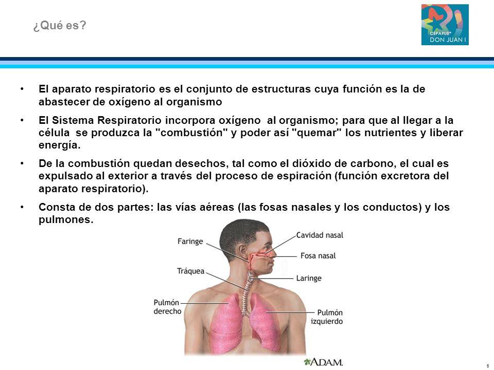 El aparato respiratorio es el conjunto de estructuras cuya función es la de abastecer de oxígeno al organismo El Sistema Respiratorio incorpora oxígen