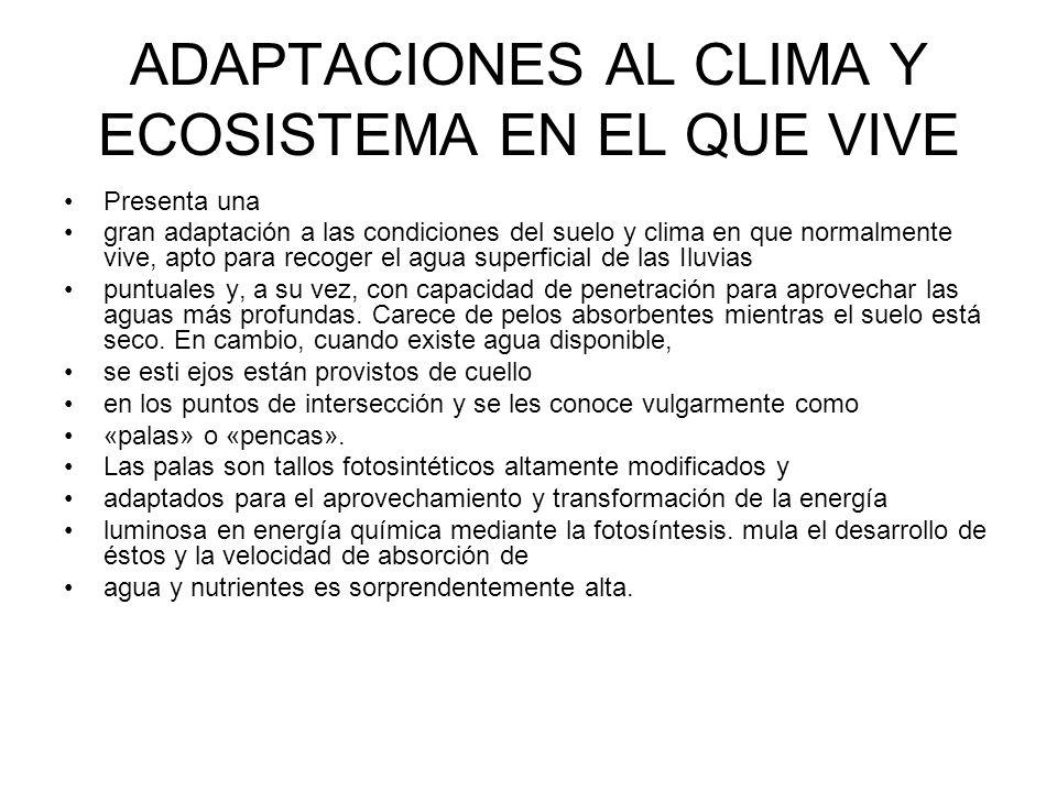ADAPTACIONES AL CLIMA Y ECOSISTEMA EN EL QUE VIVE Presenta una gran adaptación a las condiciones del suelo y clima en que normalmente vive, apto para