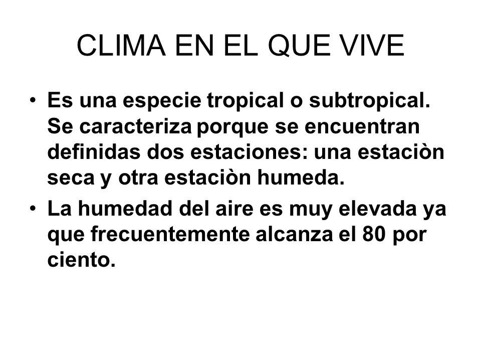 CLIMA EN EL QUE VIVE Es una especie tropical o subtropical. Se caracteriza porque se encuentran definidas dos estaciones: una estaciòn seca y otra est