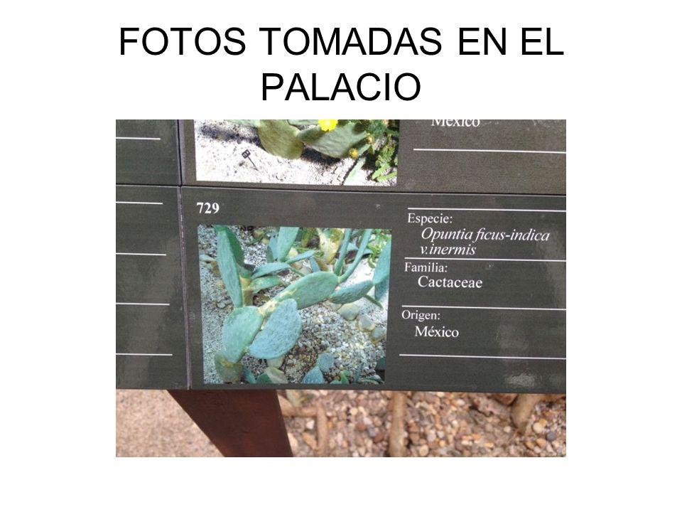 FOTOS TOMADAS EN EL PALACIO