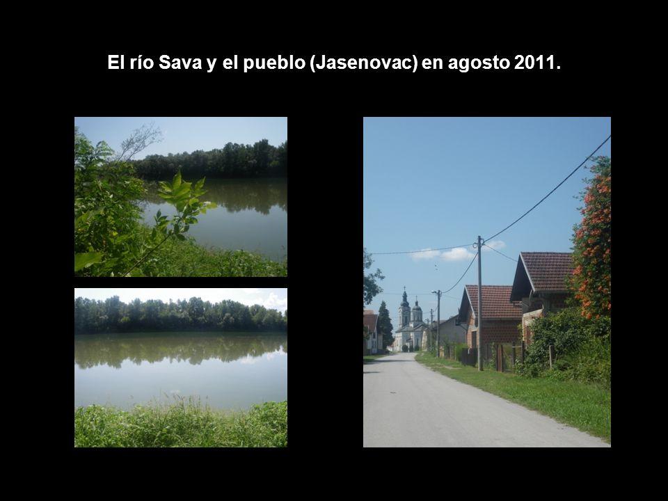 El río Sava y el pueblo (Jasenovac) en agosto 2011.