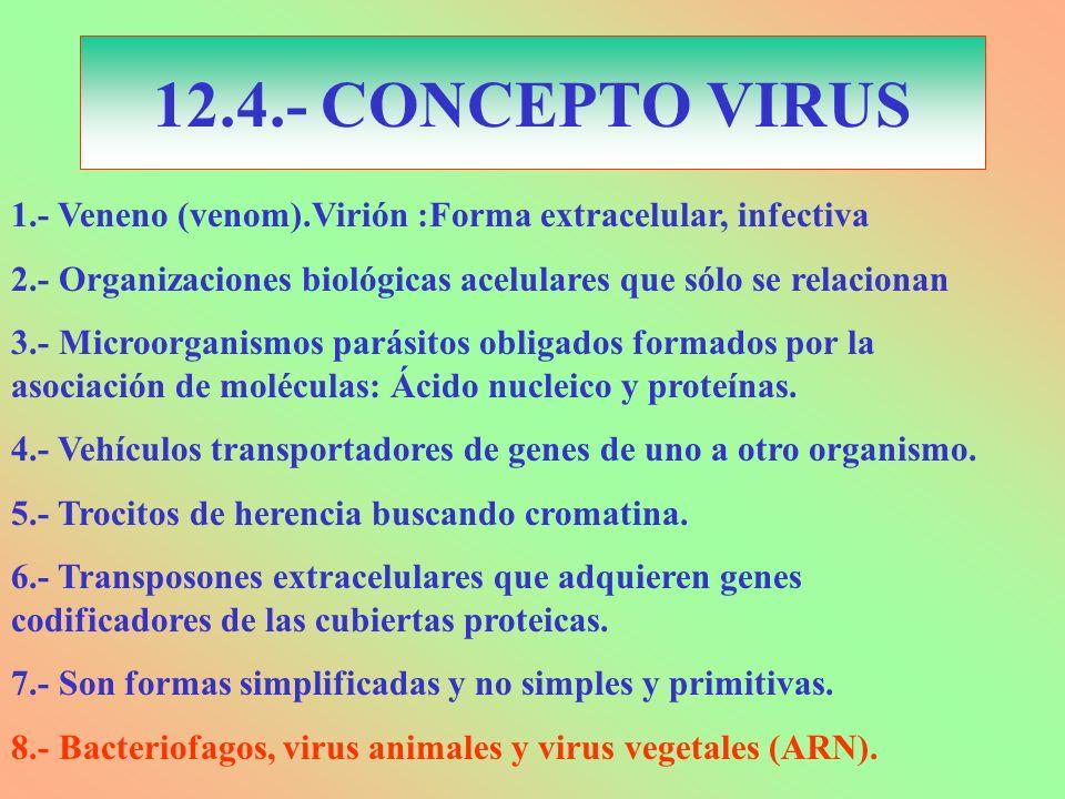 12.4.- CONCEPTO VIRUS 1.- Veneno (venom).Virión :Forma extracelular, infectiva 2.- Organizaciones biológicas acelulares que sólo se relacionan 3.- Mic