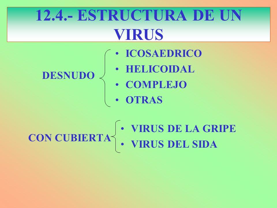 12.4.- ESTRUCTURA DE UN VIRUS ICOSAEDRICO HELICOIDAL COMPLEJO OTRAS CON CUBIERTA VIRUS DE LA GRIPE VIRUS DEL SIDA DESNUDO