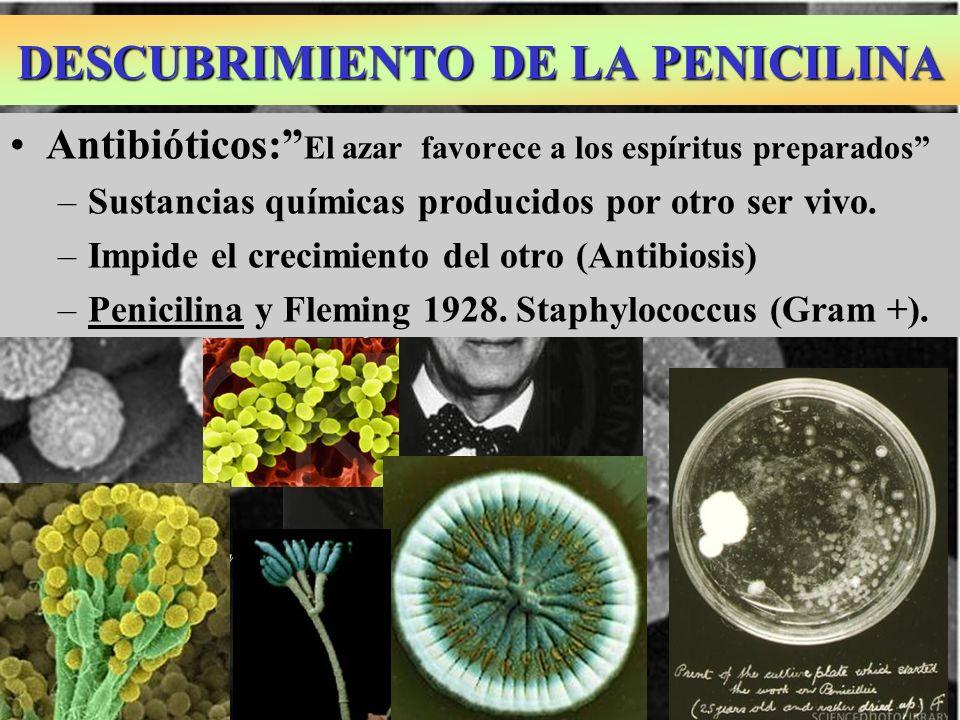 DESCUBRIMIENTO DE LA PENICILINA Antibióticos: El azar favorece a los espíritus preparados –Sustancias químicas producidos por otro ser vivo. –Impide e