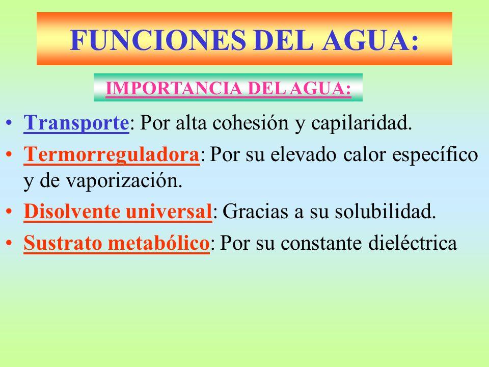 FUNCIONES DEL AGUA: Transporte: Por alta cohesión y capilaridad. Termorreguladora: Por su elevado calor específico y de vaporización. Disolvente unive