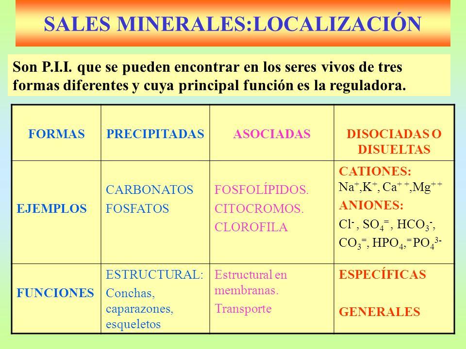 SALES MINERALES:LOCALIZACIÓN FORMASPRECIPITADASASOCIADASDISOCIADAS O DISUELTAS EJEMPLOS CARBONATOS FOSFATOS FOSFOLÍPIDOS. CITOCROMOS. CLOROFILA CATION