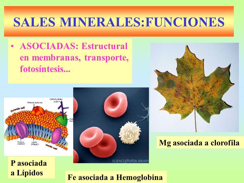 SALES MINERALES:FUNCIONES ASOCIADAS: Estructural en membranas, transporte, fotosíntesis... Mg asociada a clorofila Fe asociada a Hemoglobina P asociad