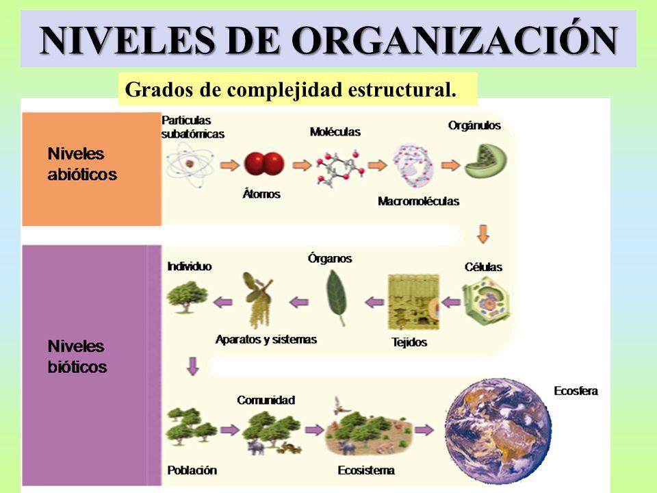 NIVELES DE ORGANIZACIÓN Grados de complejidad estructural.
