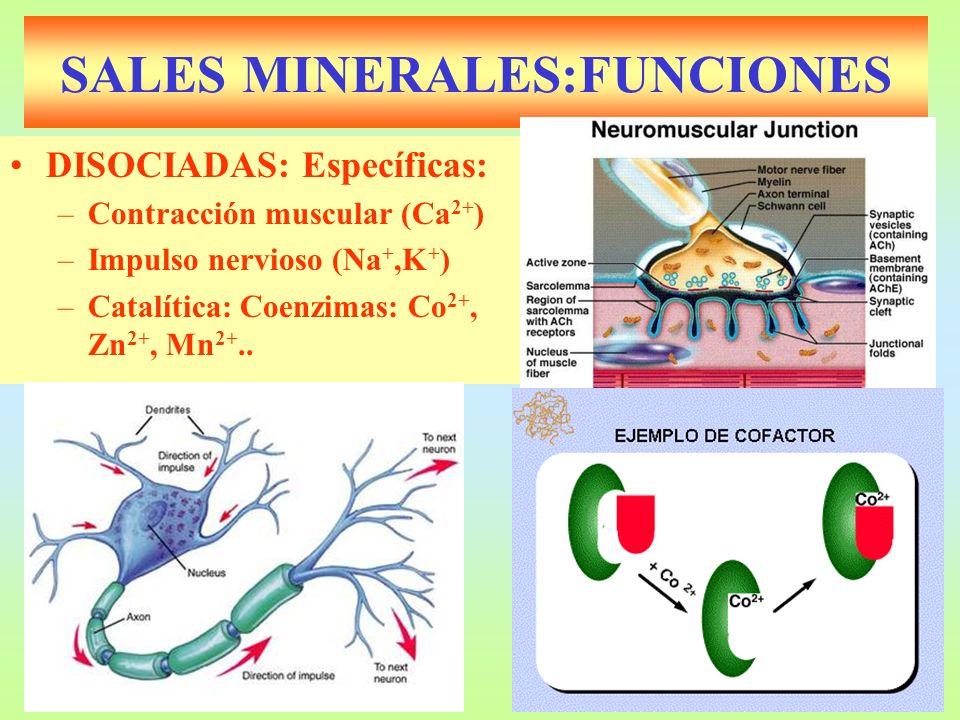 SALES MINERALES:FUNCIONES DISOCIADAS: Específicas: –Contracción muscular (Ca 2+ ) –Impulso nervioso (Na +,K + ) –Catalítica: Coenzimas: Co 2+, Zn 2+,