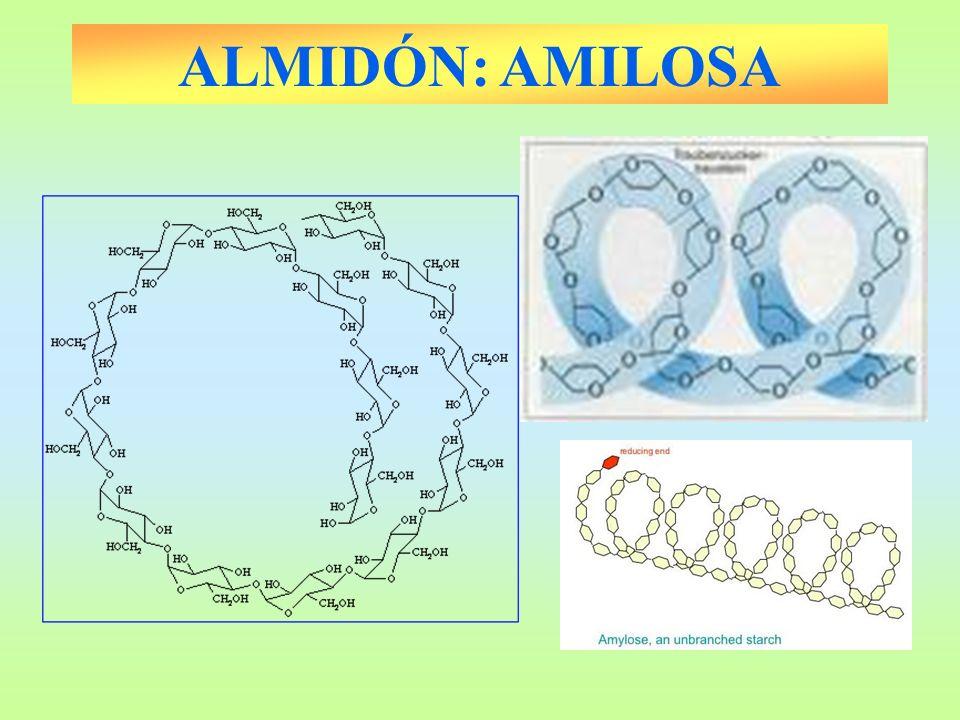 ALMIDÓN: AMILOSA