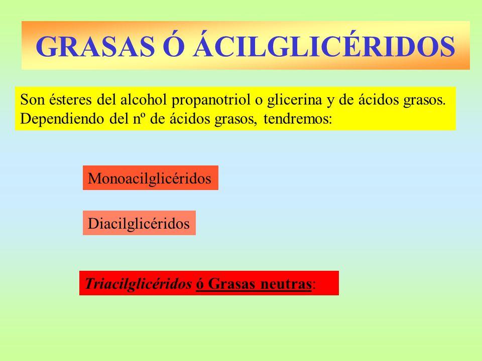 GRASAS Ó ÁCILGLICÉRIDOS Monoacilglicéridos Son ésteres del alcohol propanotriol o glicerina y de ácidos grasos. Dependiendo del nº de ácidos grasos, t