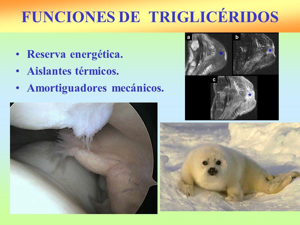 FUNCIONES DE TRIGLICÉRIDOS Reserva energética. Aislantes térmicos. Amortiguadores mecánicos.