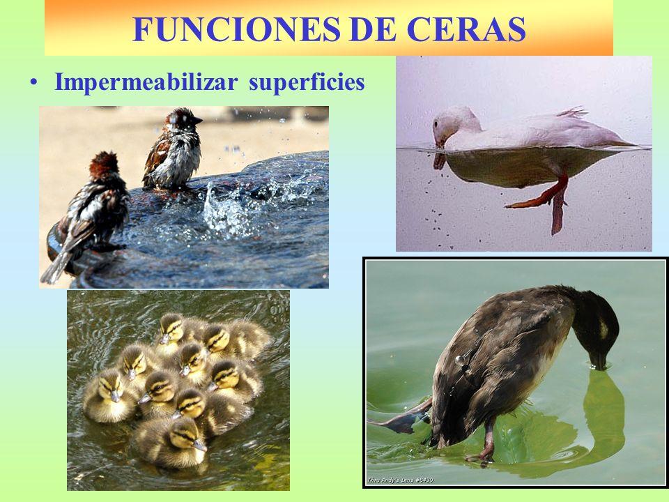 Impermeabilizar superficies FUNCIONES DE CERAS