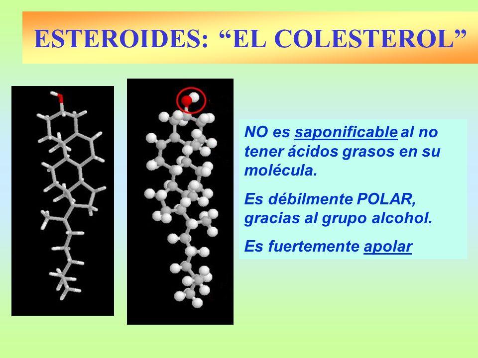 NO es saponificable al no tener ácidos grasos en su molécula. Es débilmente POLAR, gracias al grupo alcohol. Es fuertemente apolar ESTEROIDES: EL COLE