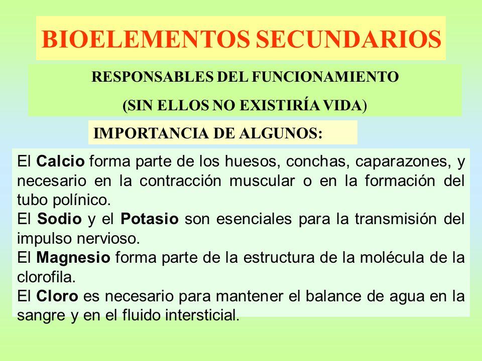 BIOELEMENTOS SECUNDARIOS RESPONSABLES DEL FUNCIONAMIENTO (SIN ELLOS NO EXISTIRÍA VIDA ) IMPORTANCIA DE ALGUNOS: El Calcio forma parte de los huesos, c
