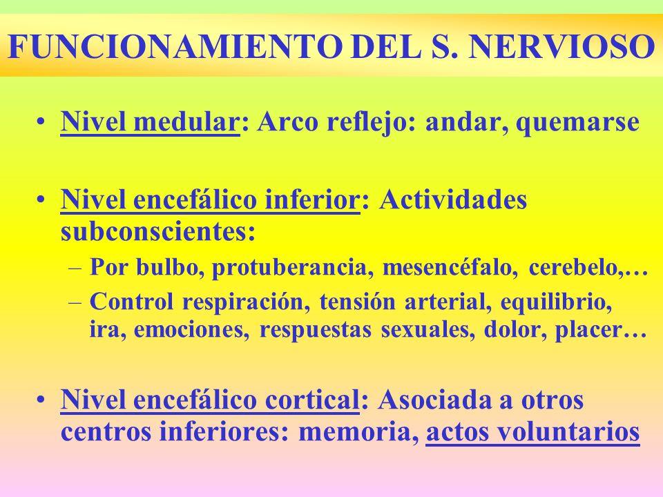FUNCIONAMIENTO DEL S. NERVIOSO Nivel medular: Arco reflejo: andar, quemarse Nivel encefálico inferior: Actividades subconscientes: –Por bulbo, protube