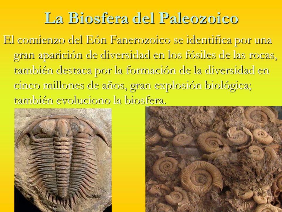 La Biosfera del Paleozoico Entre el Cámbrico y el Ordovícico aparecieron los principales grupos de invertebrados